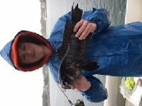 Nice Black Sea Bass